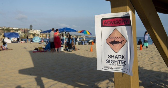 The Latest: Swimming halted after suspected shark attack