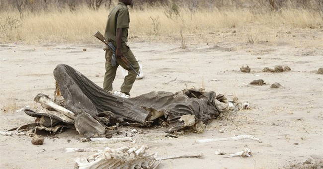 Poachers in Zimbabwe use cyanide to kill 5 elephants