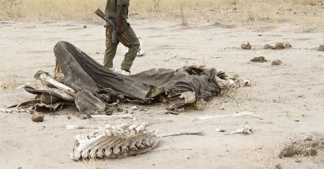Poachers in Zimbabwe use cyanide to kill 5 elephants
