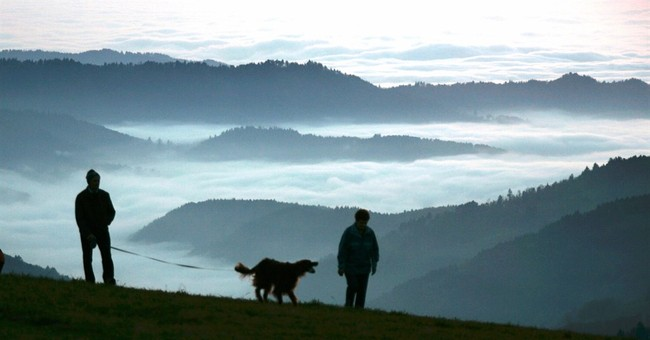 Study suggests dogs first appeared in 2 places in Eurasia