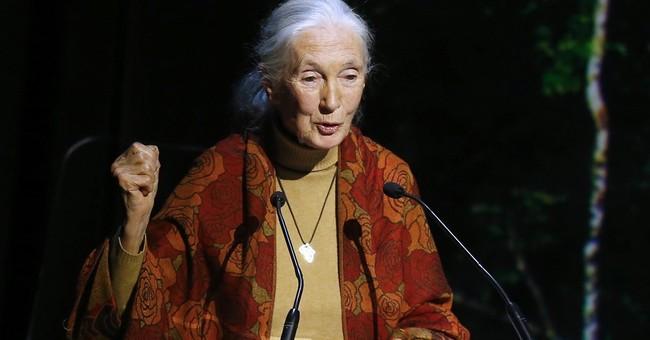 Jane Goodall feels sorry for Cincinnati Zoo director
