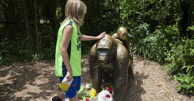 Tourists in Africa get close, but not too close, to gorillas