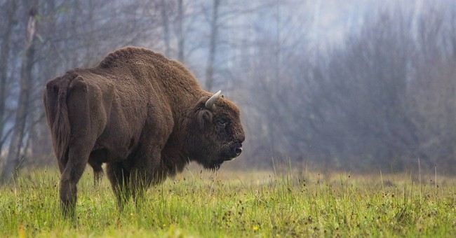 Global experts assess Poland's threatened pristine forest