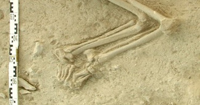 Stone Age Aegean Sea migrants brought agriculture to Europe