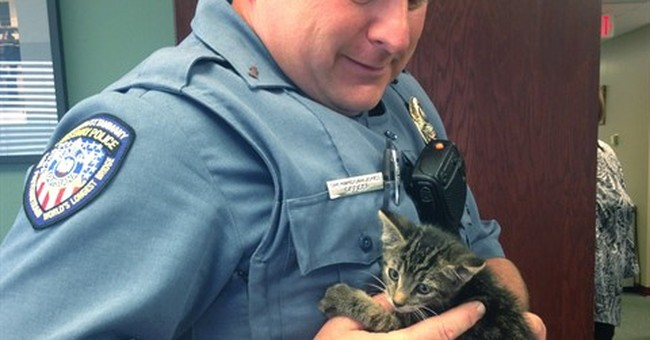 Police rescue kitten from the Lake Pontchartrain Causeway