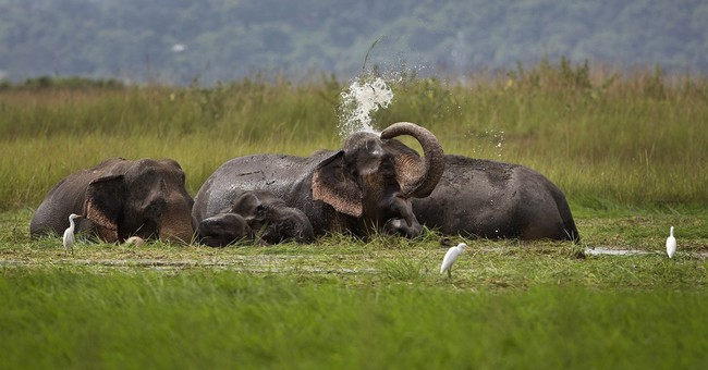 Permits for killing Indian wildlife spark government row