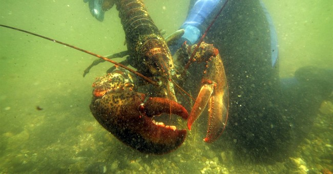 Maine's gov. criticizes European proposal to ban US lobster