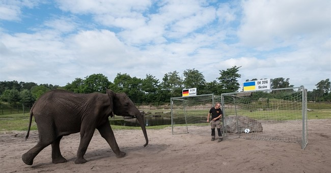 Nelly the psychic elephant predicts Germany over Ukraine