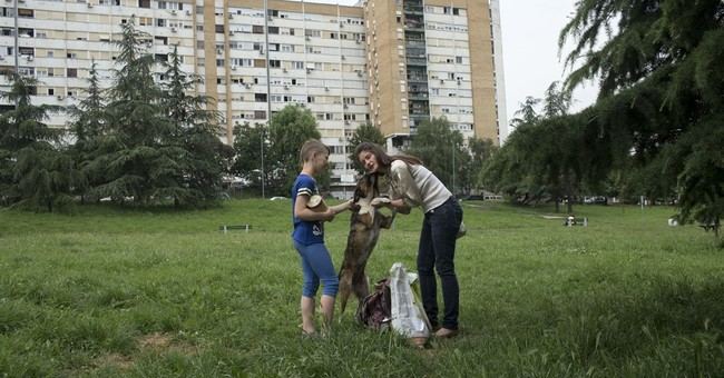 Call to Help! Belgrade activist sets up animal charity