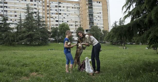 Call to Help! Belgrade activist sets up animal charity