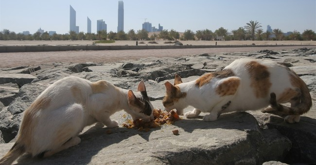 Off Abu Dhabi's coast, an island home to cats seeks aid