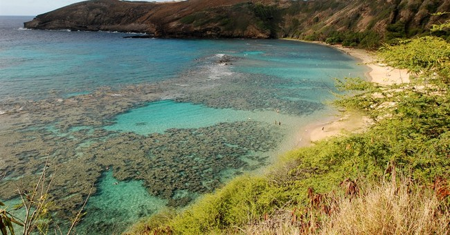 What are coral reefs and why are they important