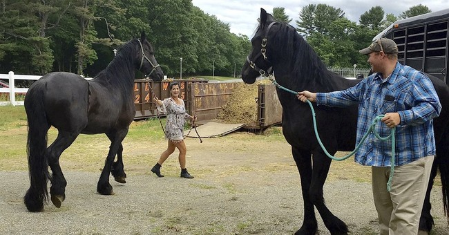 Abused horses now rehabbed to help veterans with PTSD