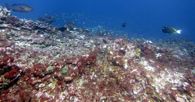 The Latest: Coral bleaching likely to last through 2016