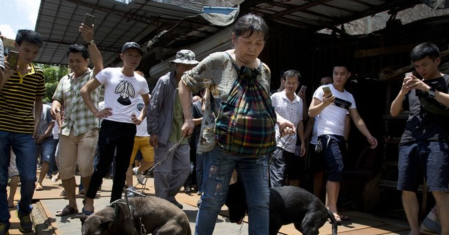 China city holds dog-meat eating festival despite protests