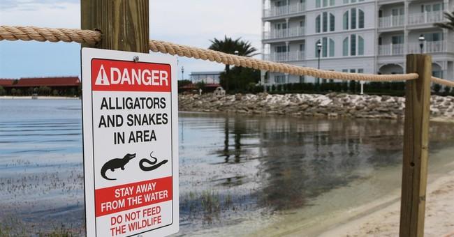 Officials believe they've captured alligator that killed boy