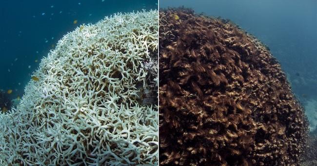 APNewsBreak New technology speeds massive coral reef survey