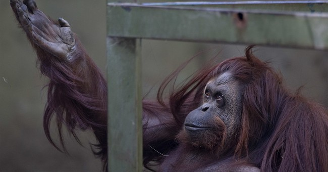 Zoo in Argentina's capital to be turned into ecological park