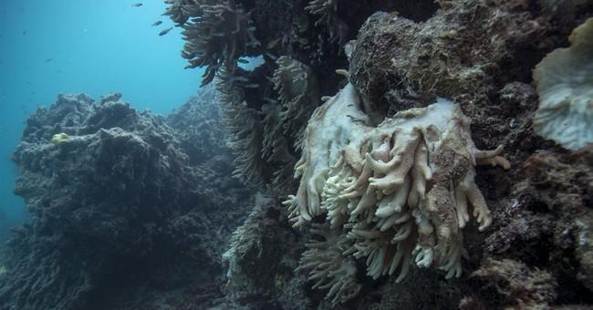 APNewsBreak: Scientists send coral reef plea to Australia