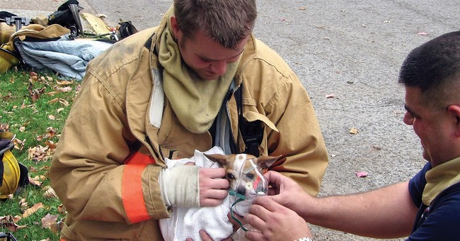 New law supports first responders who treat injured pets