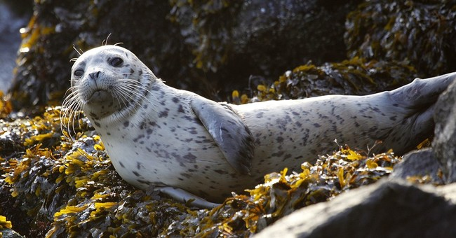 NOAA reminding people not to touch or pick up seal pups