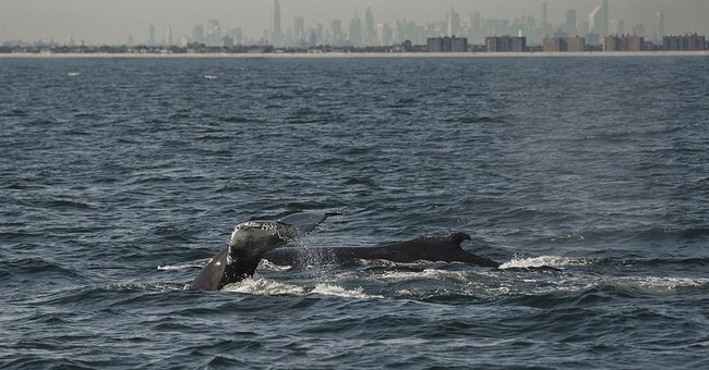 Can you hear them now? New buoy listens for singing whales