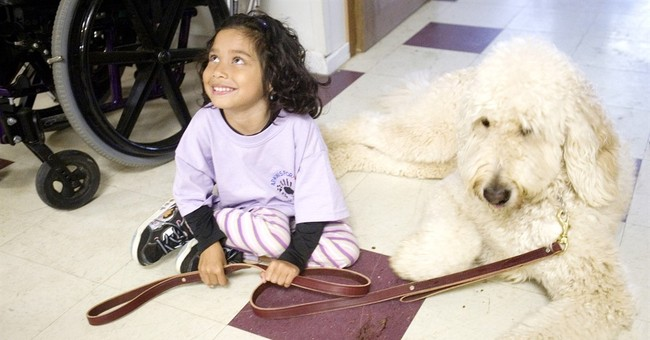 High court will hear dispute over service dog at school