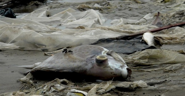 Vietnam says Taiwanese company responsible for fish deaths