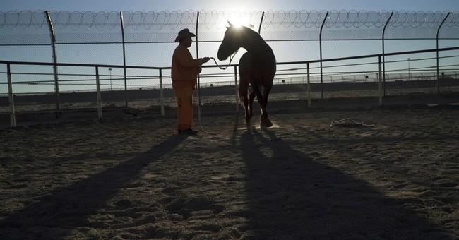 Arizona prison horse program helps inmates get on track