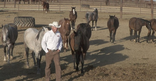 Arizona prison horse program helps inmates get on track