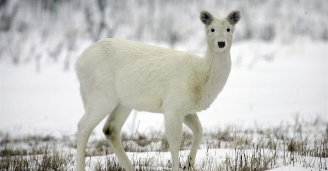 Army site's new owner plans to preserve rare white deer herd