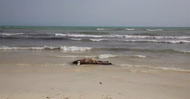 Rights group blasts EU plans on halting Libya migrant exodus