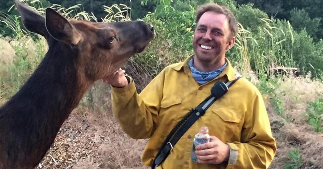 Orphaned elk nuzzles Washington state firefighters