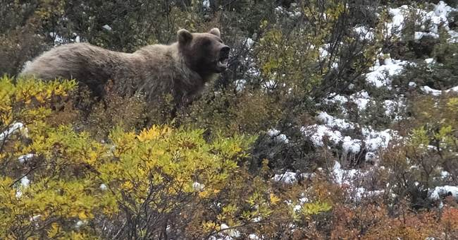 Outdoor survival tips for Bear Country