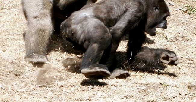 Endangered gorilla dies at Mexico City zoo