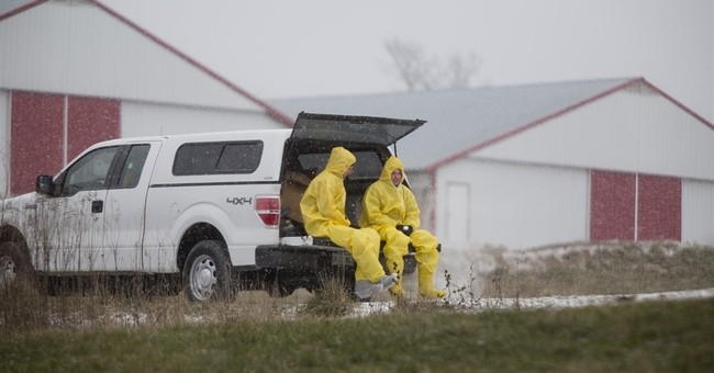 Q&A: Details about the latest round of bird flu