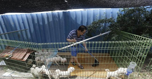 In South Korea, puppy farms struggle amid abuse allegations
