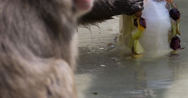 Fruit pops on offer at the Rome zoo as summer temps soar