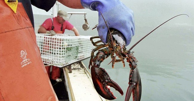 Senate again signs off on Sept. 25 as National Lobster Day
