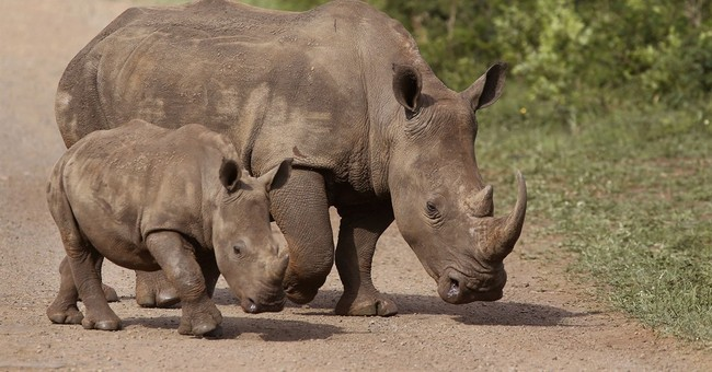 South African group reports slight drop in rhino poaching