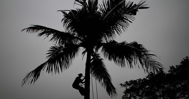Coconut trees are no longer considered trees in Indian state