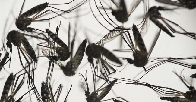 How does Zika spread? Utah infection raises new questions