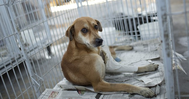 Dog shot 5 times in Rio survives, to be put up for adoption