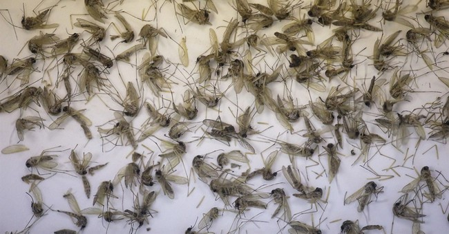 Brazilian scientists ID common mosquito as a Zika source