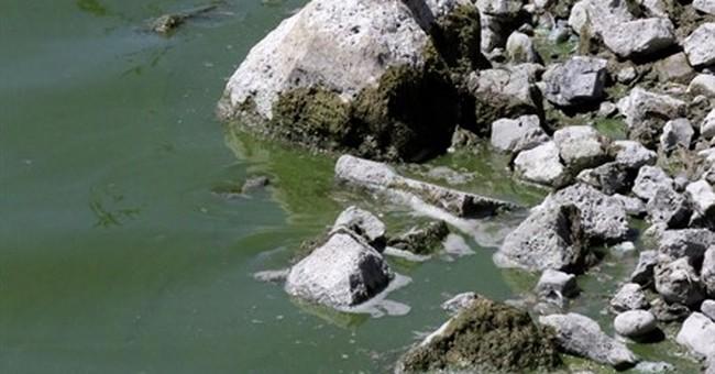 Toxic algae bloom swarms Utah Lake, seeps into farm supply