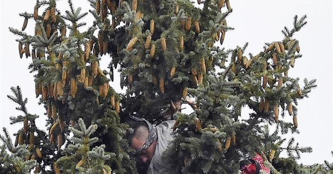 Man takes to tree to avoid police, surrenders after 5 hours