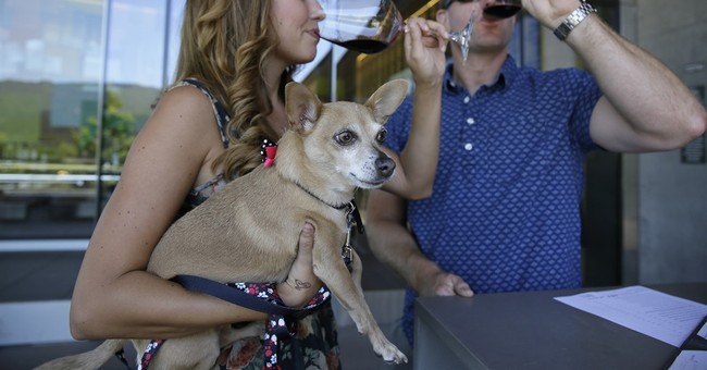 Dog-friendly wineries in the Napa Valley