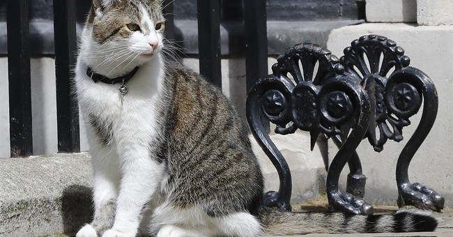 UK animal rescue center advises Downing Street on cat fights