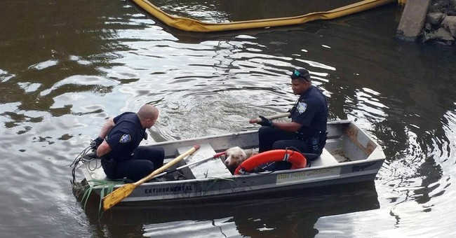 Dog en route to Asia escapes, ends up New Jersey swamp