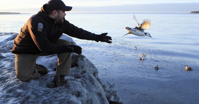 Federal agency calls for research into Alaska seabird deaths